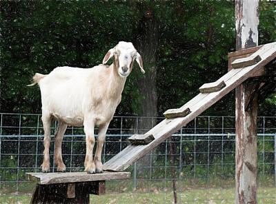 Digital Art -  Goat Smile by Susan Stone