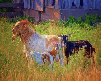 Photograph - Goat Trio by Nikolyn McDonald