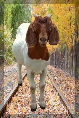 Animal Tracks Digital Art - Goats Are Bigger In Texas by Ella Kaye Dickey
