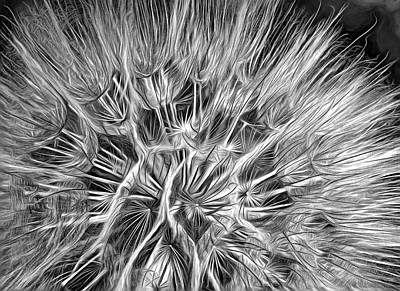 Photograph - Goat's Beard - The Inner Weed 3 - Paint Bw by Steve Harrington
