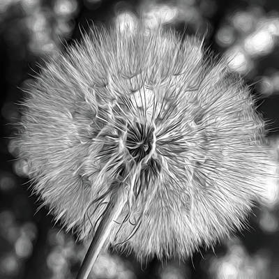 Photograph - Goat's Beard - The Inner Weed - Paint Bw by Steve Harrington