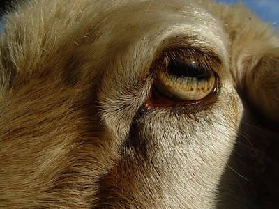Cummington Photograph - Goat's Eye by Rosemary Wessel