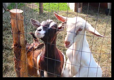 Art Print featuring the photograph Goats by Felipe Adan Lerma