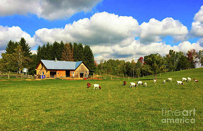 Old Barn Drawing Photograph - Goats Grazing by Anthony Djordjevic