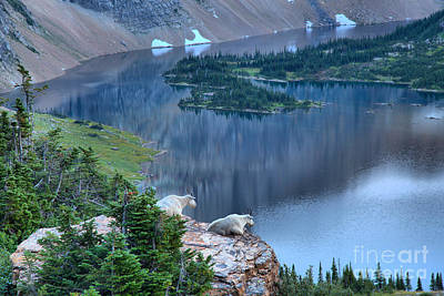 Photograph - Goats Over Hidden Lake by Adam Jewell