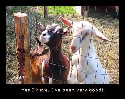 Endearing Digital Art - Goats Poster by Felipe Adan Lerma