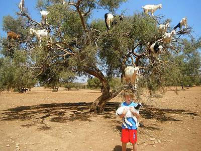 Exploramum Photograph - Goats Up A Tree With Boy by Exploramum Exploramum