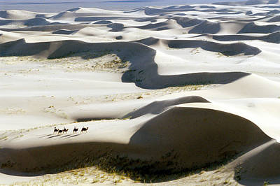 Camel Photograph - Gobi Desert by Ria Novosti