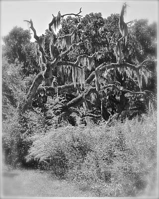 Photograph - Goblin Tree by Carol  Bradley