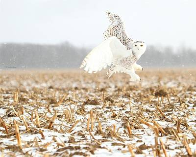 Photograph - Goddess Of The Snowy Fields by Heather King