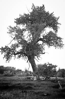 Goddess Tree 2 Art Print by Matthew Angelo