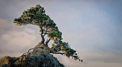 Photograph - God's Bonsai by Betty Depee