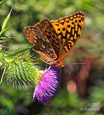 Blue Swallowtail Photograph - Gods Creation-18 by Robert Pearson