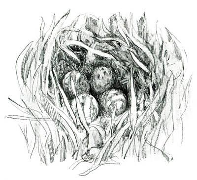 Godwit Nest Art Print