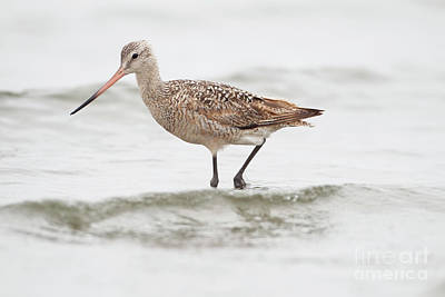 Photograph - Godwit Playing In The Ocean by Ruth Jolly