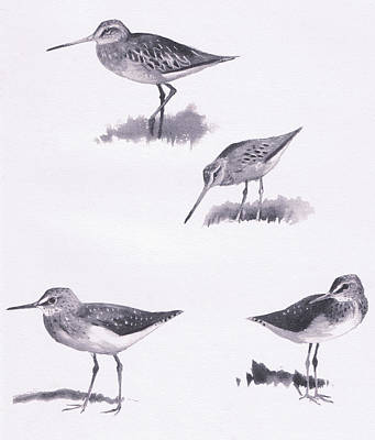 Sandpiper Drawing - Godwits And Green Sandpipers by Archibald Thorburn