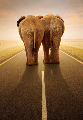 Animals Photos - Going away together / travelling by road by Johan Swanepoel