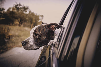 Photograph - Going For A Ride by Jeanette Fellows