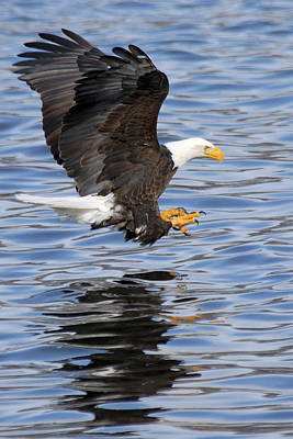 Photograph - Going For The Kill by Larry Ricker