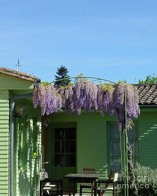 Photograph - Going Green With Wisteria by Barbie Corbett-Newmin