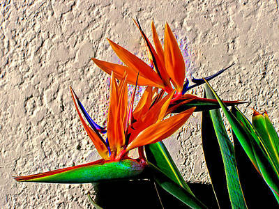 Strelitzia Digital Art - Going In Different Directions by Michael Durst