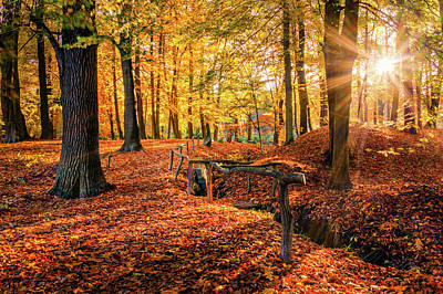 Photograph - Going To The Autumn Sun Along The Fence by Dmytro Korol