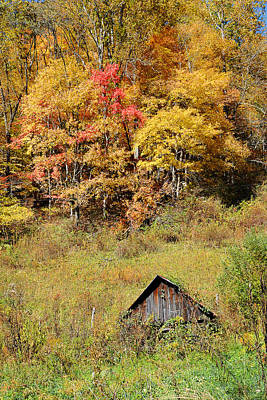 Photograph - Gold Above Barn by Alan Lenk