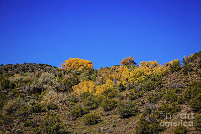 Photograph - Gold And Blue by Jon Burch Photography