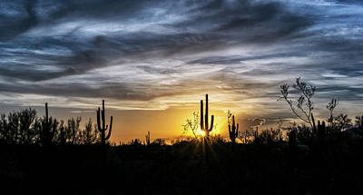 Photograph - Gold And Blue Saguaro Sunset  by Saija Lehtonen