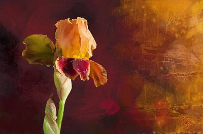 Gold And Red Iris Art Print