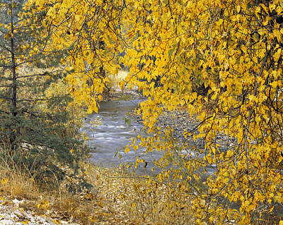 Photograph - Gold And Yellow by Leland D Howard