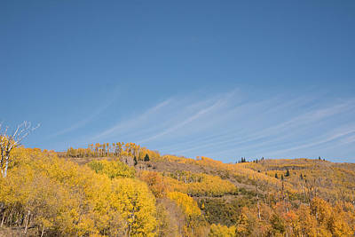 Photograph - Gold Aspens Dixie National Forest Ut by Michael Gooch