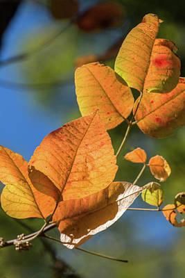 Photograph - Gold Autumn Leaf by Deb Buchanan