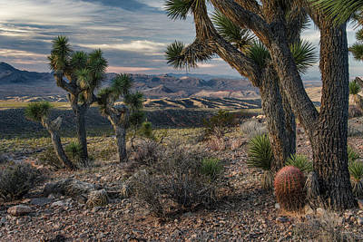 Photograph - Gold Butte Desert by Leland D Howard