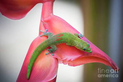 Photograph - Gold Dust Day Gecko 2 by Daniel Knighton