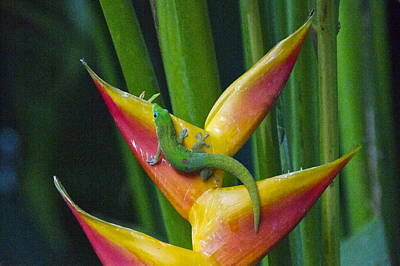 Lightscapes Photograph - Gold Dust Day Gecko by Sean Griffin