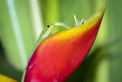 Photograph - Gold Dust Day Gecko by Windy Corduroy