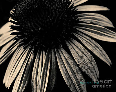 Photograph - Gold Echinacea   by Charles Muhle