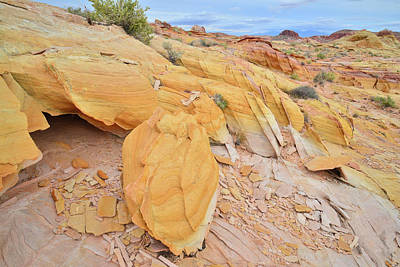Photograph - Gold Everywhere In Valley Of Fire State Park by Ray Mathis