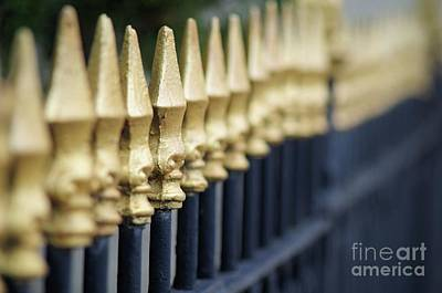 Photograph - Gold Fence  by John S