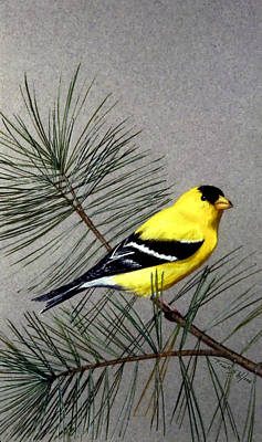 Painting - Gold Finch by Frank Wilson