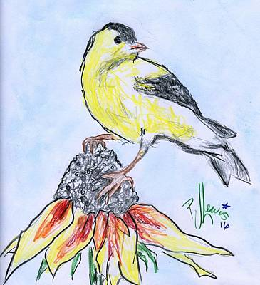 Finch Drawing - Gold Finch by PJ Lewis