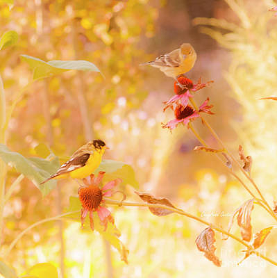 Photograph - Gold Finch Saturday by CheyAnne Sexton