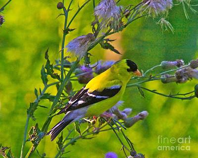 Finch Mixed Media - Gold Finches-11 by Robert Pearson
