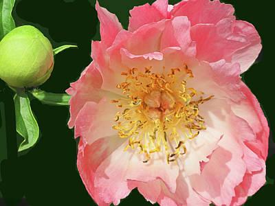 Flora Macdonald Photograph - Gold Green And Rose by Ian  MacDonald
