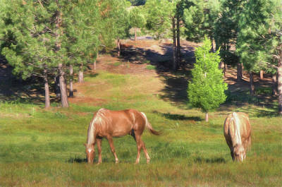Palomino Horse Photograph - Gold In Nevada by Donna Kennedy