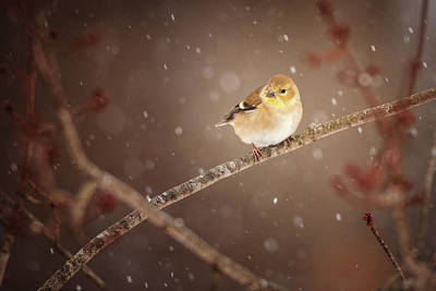 Photograph - Gold In The Snow by Jessica Nelson
