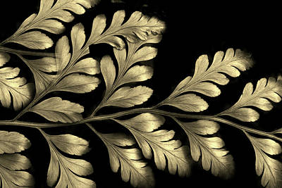 Photograph - Gold Leaf by Jessica Jenney