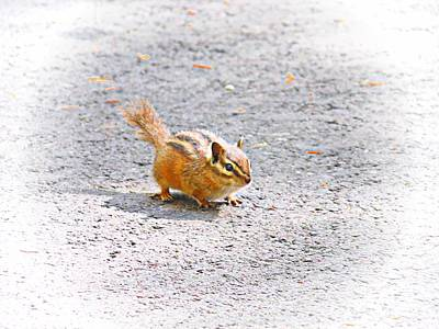 Photograph - Gold-mantled Ground Squirrel by Joe Duket