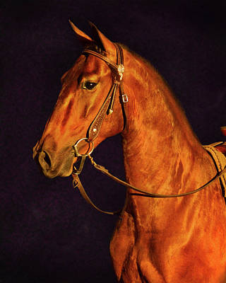 Photograph - Gold Mustang by Jill Monroe
